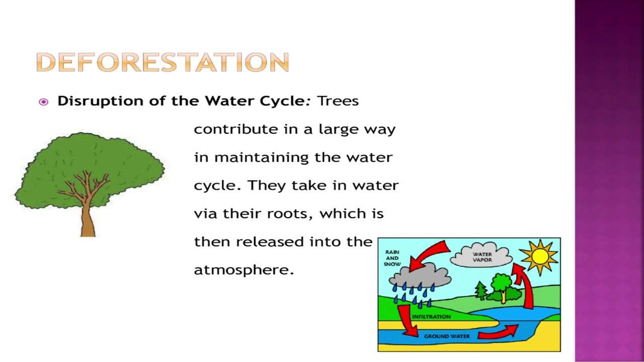 Deforestation. Types of irregular verbs